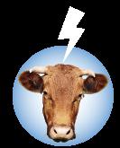 A Vaquiña Polo que Vale